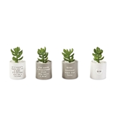 Mom Sentiment Potted Succulents